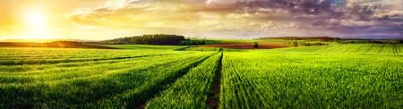 Photo pour Vast rural landscape sunset panorama, with a field or meadow and tracks leading to the horizon and the colorful clouds - image libre de droit