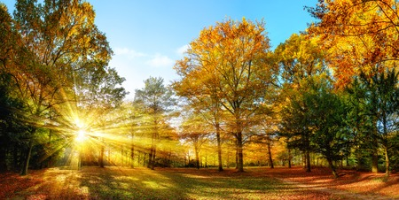 Photo pour Scenic autumn panorama with the sun shining through the gold foliage and illumining the forest landscape - image libre de droit