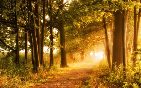 Foto de Beautiful autumn scene invites to a walk on a misty footpath in the forest with beams of sunlight - Imagen libre de derechos
