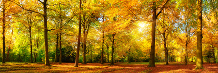 Foto de Gorgeous autumn landscape panorama of a scenic forest with lots of warm sunshine - Imagen libre de derechos