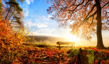 Photo for Autumn landscape with the sun warmly illumining a bench under a tree, lots of gold leaves and blue sky - Royalty Free Image