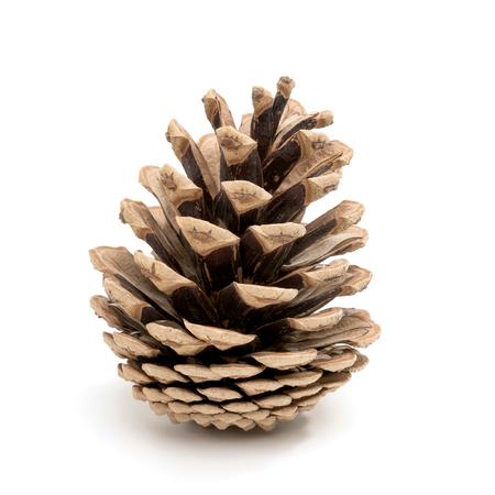 Foto de Perfect pine cone studio shot, isolated on white - Imagen libre de derechos