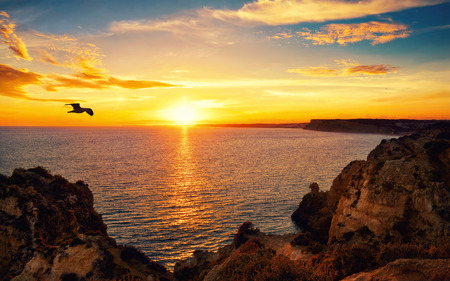 Photo pour Tranquil sunset scenery at the ocean with the sunlight reflected on the water, a flying bird and the rocky coast - image libre de droit