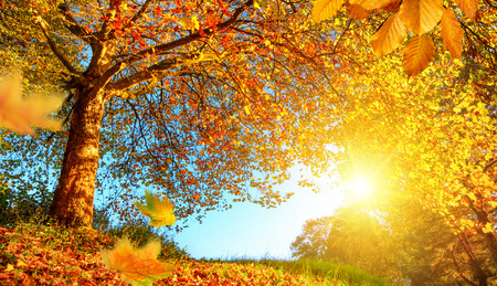 Golden autumn scenery with a nice tree, falling leaves, clear blue sky and the sun shining warmly