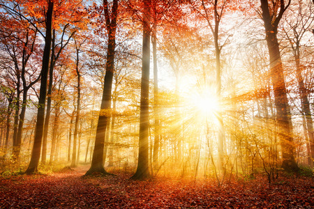 Foto de Warm autumn scenery in a forest, with the sun casting beautiful rays of light through the mist and trees - Imagen libre de derechos