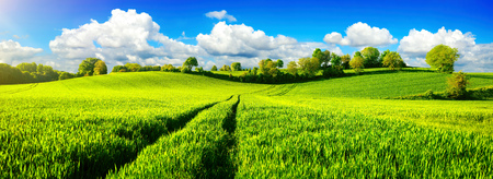 Photo for Panoramic landscape with idyllic vast green fields on hills, vibrant blue sky and fluffy white clouds - Royalty Free Image