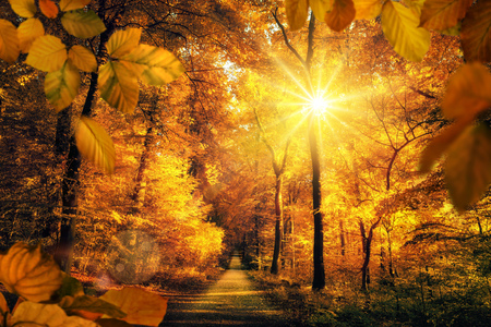 Photo for Gold autumn scenery in a forest, with the sun casting beautiful rays of light through the foliage unto a footpath - Royalty Free Image