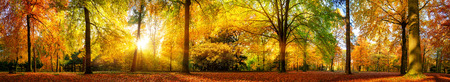 Photo pour Extra wide panorama of a gorgeous forest in autumn, a scenic landscape with pleasant warm sunshine - image libre de droit