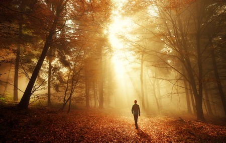 Photo for Male hiker walking into the bright gold rays of light in the autumn forest, landscape shot with amazing dramatic lighting mood - Royalty Free Image