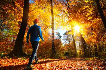 Foto de Male hiker walking towards the bright gold rays of sunlight in the autumn forest - Imagen libre de derechos