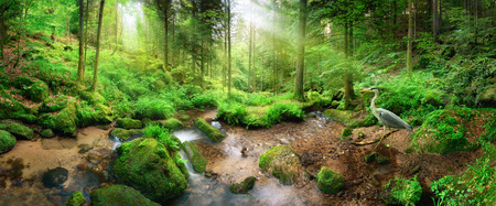 Photo for Enchanting panoramic forest scenery with soft light falling through the foliage, a stream with tranquil water and a heron - Royalty Free Image
