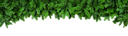 Photo for Wide Christmas border arranged with fresh fir branches isolated on white shaped as an arch, banner format - Royalty Free Image
