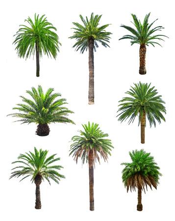 Photo pour palm tree isolated on white - image libre de droit