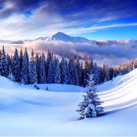 Photo pour snovy trees on winter mountains - image libre de droit