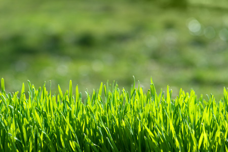 Photo pour green grass on green background - image libre de droit