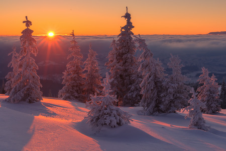 Photo for Fantastic orange evening landscape glowing by sunlight. Dramatic wintry scene with snowy trees. Kukul ridge, Carpathians, Ukraine, Europe. Merry Christmas! - Royalty Free Image