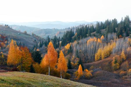 Photo for Amazing scene on autumn mountains. Yellow and orange trees in fantastic morning sunlight. Carpathians, Europe. Landscape photography - Royalty Free Image
