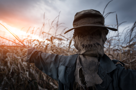 Photo for Scary scarecrow in a hat on a cornfield in orange sunset background. Halloween holiday concept - Royalty Free Image