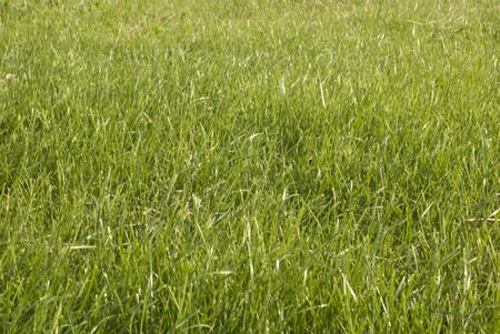 Large field. Focus on grass