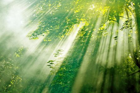 beautiful magical sunlight in misty forest  mural