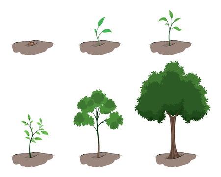 Ilustración de Vector illustration of a stages of growth of the tree - Imagen libre de derechos