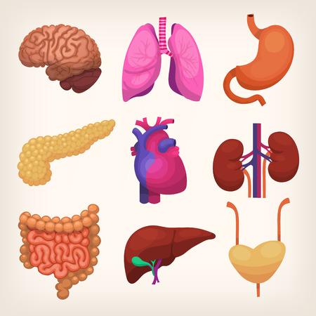 Ilustración de Set of colorful realistic human body organs - Imagen libre de derechos