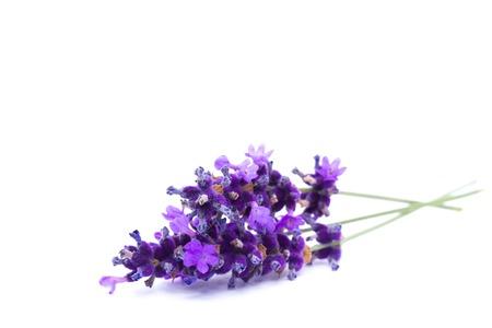 Photo pour Lavender isolated on white background - image libre de droit