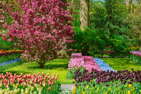 Photo for Flower Beds of Tulips in the Garden at Spring - Royalty Free Image