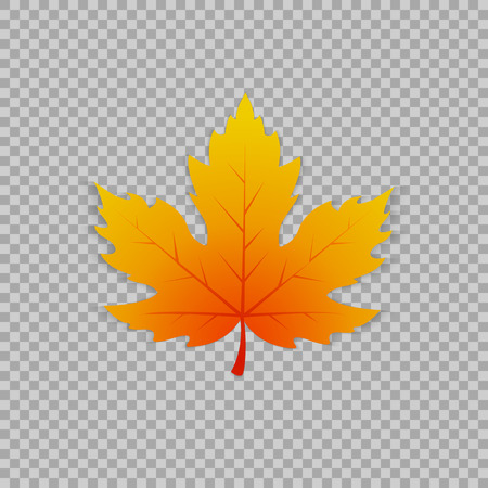 Ilustración de Maple leaf in a realistic style on transparent background, isolated object. Vector illustration, botanical element - Imagen libre de derechos