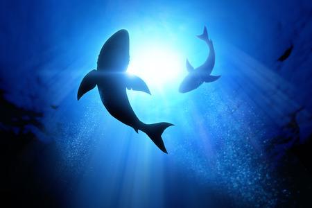 Foto de Under the waves circle two great white sharks. - Imagen libre de derechos