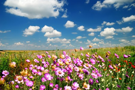 Photo pour Summer landscape with field flowers. Focus on horizon. - image libre de droit