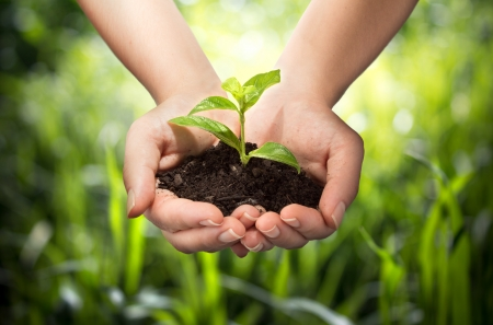 Photo pour plant in hands - grass background  - image libre de droit