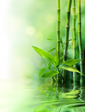 Photo for bamboo stalks on water - blurs  - Royalty Free Image