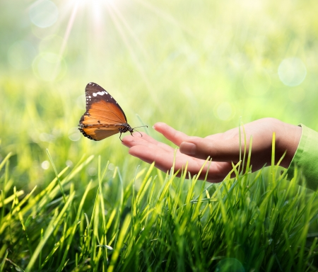 Photo pour butterfly in hand on grass  - image libre de droit