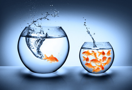 Photo for goldfish jumping - improvement concept  - Royalty Free Image