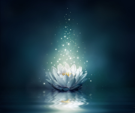 Photo for waterlily on water - fairytale background  - Royalty Free Image