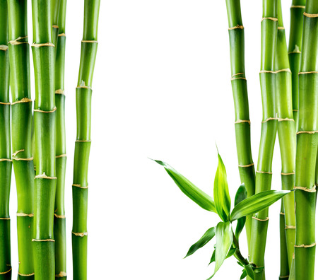 Photo for branches of bamboo board - Royalty Free Image