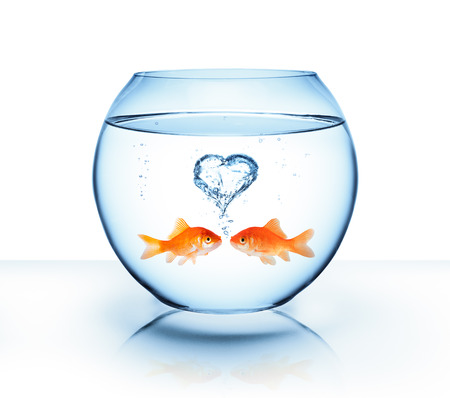 Photo pour goldfish in love - romantic concept - image libre de droit