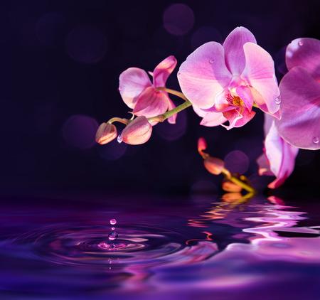 Photo pour purple orchids and drops in water - image libre de droit