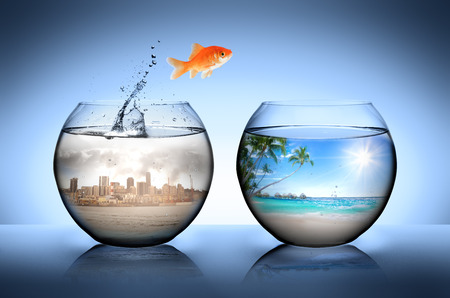 Foto de goldfish jumping away from city for go to tropical beach - Imagen libre de derechos