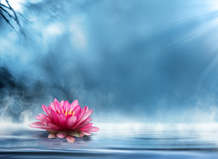Photo for spirituality zen in peaceful scenery - Royalty Free Image