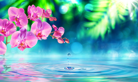 Photo pour orchid in zen garden with droplet on pond - image libre de droit