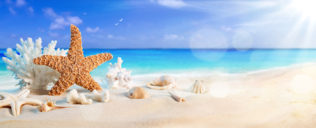 Photo pour seashells on seashore in tropical beach  summer holiday background - image libre de droit