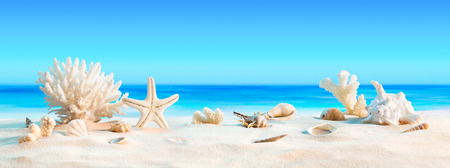 Photo for Landscape with seashells on tropical beach  summer holiday - Royalty Free Image