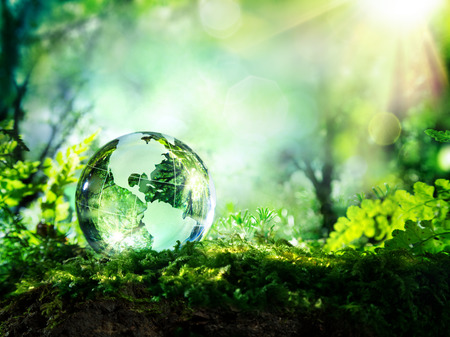 Photo for crystal globe on moss in a forest  environment concept - Royalty Free Image