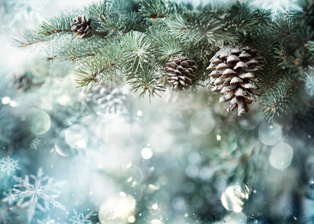 Photo pour Fir Branch With Pine Cone And Snow Flakes - image libre de droit