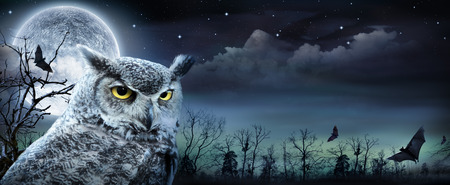 Photo for Halloween Scene With Owl And Full Moon - Royalty Free Image