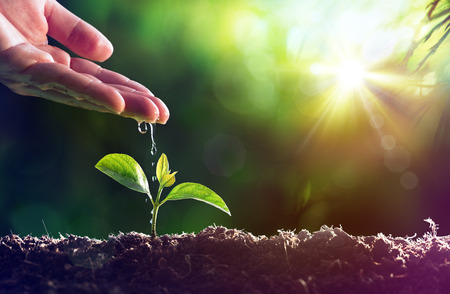 Photo pour Care Of New Life - Watering Young Plant - image libre de droit