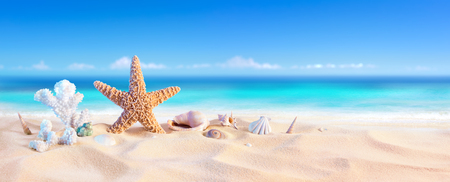 Photo for Golden Sand With Seashell And Starfish - Tropical Seashore - Royalty Free Image