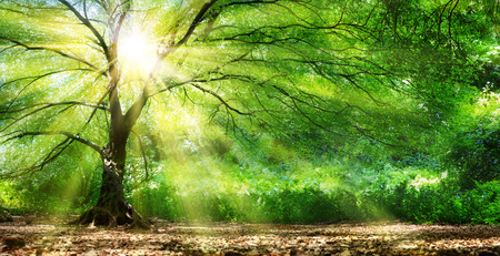 Foto de Tree With Sunshine In Wild Forest - Imagen libre de derechos